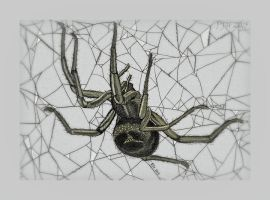 False Widow Study by PhilipHarvey