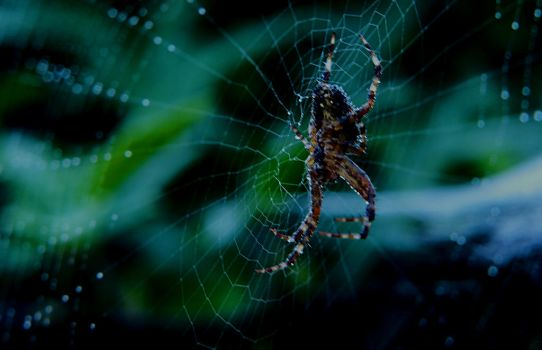 Spider web 3 by mrscats
