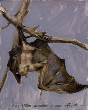 Bat - Flying Fox by AaronMiller
