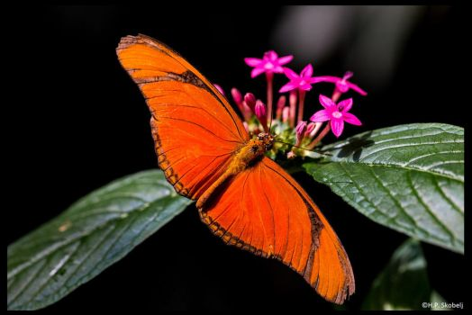 Butterfly 01 - other point of view by Blizzard1975