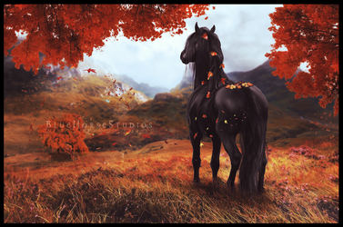 Cool Autumn Morning by endevi