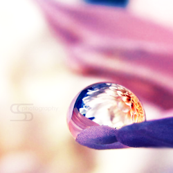 Flower in the drop by SuzySilence