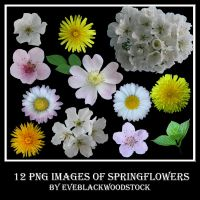 spring flowers stock pack by EveBlackwoodStock