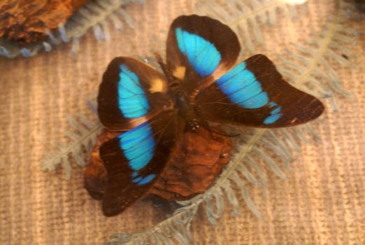 butterfly 00011 by AmySue2giggly4uStock