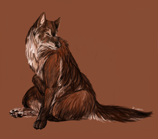 Realistic Wolf by Susiron