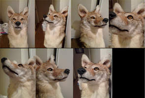 First Coyote Mount WIP by MilkyFoxWhiskers