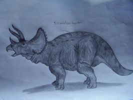 Triceratops by Teratophoneus