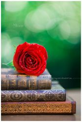 .my love affair with literature. by Kay-Noire