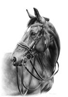 Beautiful Mare Claud by Odette1994