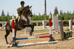 Appaloosa Hunter/Jumper Horse Show by HorseStockPhotos