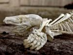 Mole Skeleton Closeup by Jewel-Wing