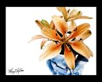 Tiger Lillies by missmarypotter