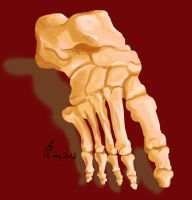 Anatomy practice - foot from the front by Zedna7