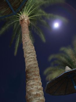 Bluring palm by andresto