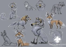 Character desings: foxes and wolves by Noukah