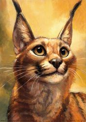 Caracal by kenket