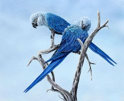 Spix Macaw by BIRDS-4-BETTER