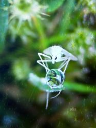 White fly by Iris-cup