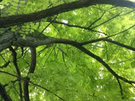 New Green Leaves by LucyQ602