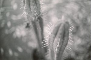 Cacti by MiaSK