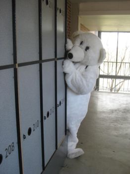 Yr 12 Muck Up Day - Polar Bear - Hide and Seek by I-Have-A-Jar-Of-Dirt