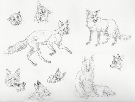 Fox sketches by casinuba