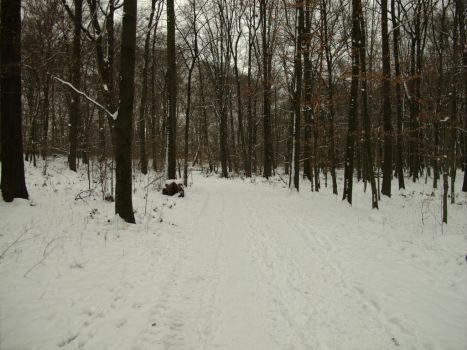 Walking in the snow. by Aribor