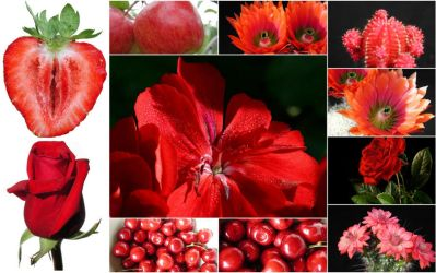 AllOurStock mosaic - red by digitalxdefiant