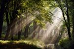 Amsterdam Forest by Northstar76