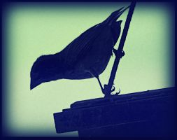 Silhouette Of A Bird by surrealistic-gloom