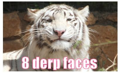 Tiger derp pack by Stock-Heil