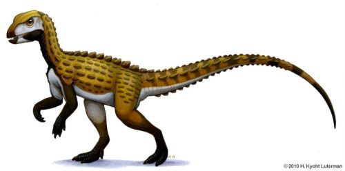 Scutellosaurus by kyoht