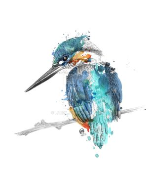 Kingfisher by Laeril