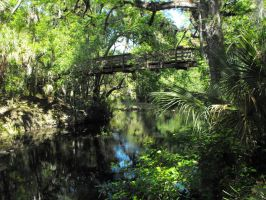 Hillsborough River State Park by SylviaAcosta