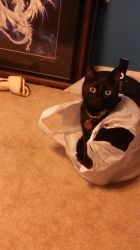 Luna in a bag :3 by AbyssinalPhantom