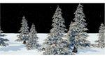 Winter Pine Trees by TheEpicBlendYEAH