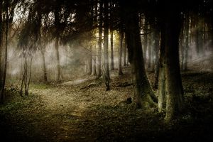 Somewhere in the Woods by RobinRoels