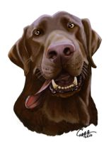 Chocolate Lab Caricature by CharReed