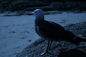 seagull by averae