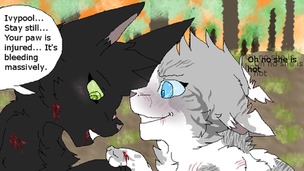 If Hollyleaf lived(HollyIvy / AU) by Skatland