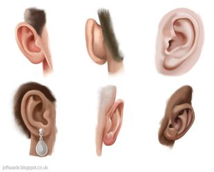 Ear studies by JeffSearle