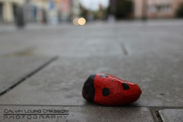 Ladybird on the Street by cleriksson