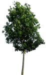 Tree 60 By Gd08 by gd08