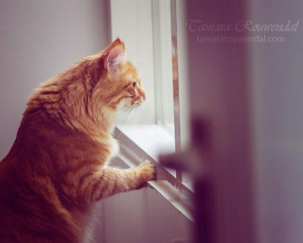 Come Home by TammyPhotography