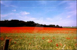 -POPPY FIELD- by Hitomii