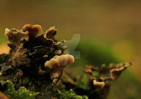 Though this looks like autumn... by clochartist-photo