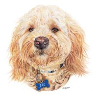 Leo The Golden Doodle by stardust12345