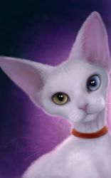 Devon Rex by Trutze