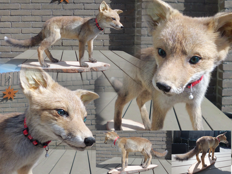 Vulture Collection: Red Fox Kit Taxidermy by Lynnzl