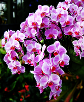 Orchids by 1---ROB---1
